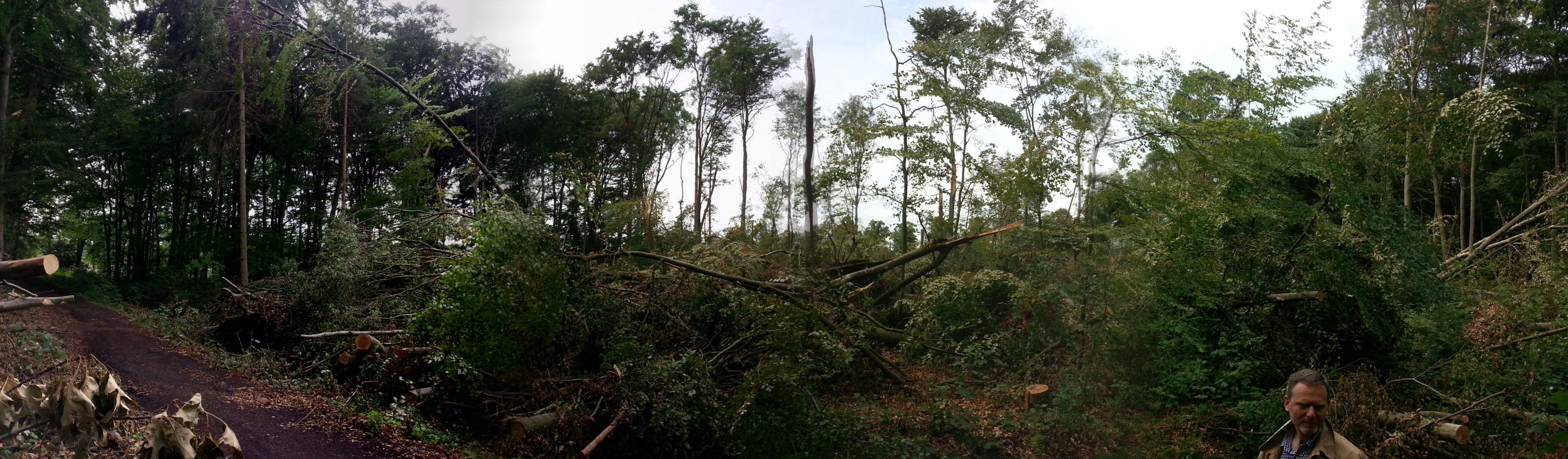 Sturmschäden im Wald bei Lüdinghausen